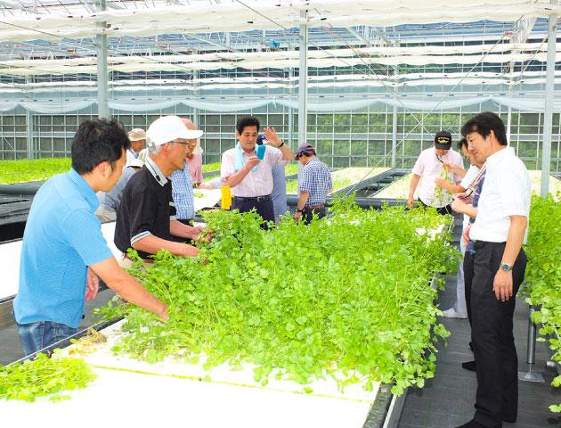 地熱温室栽培